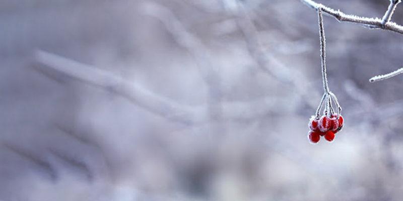 Frubelle