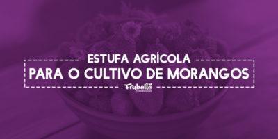 29-11-Estufa-Agrícola-Para-o-Cultivo-de-Morangos